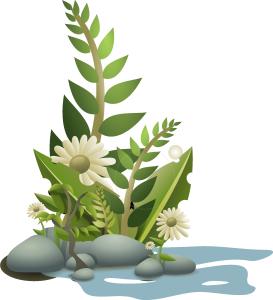 plants-34592